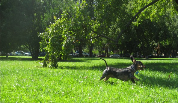 dog_running_in_park